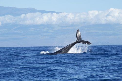 Walvissen spotten Kaikoura